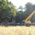 Baum wird durch Felder nach Wandlitz transportiert