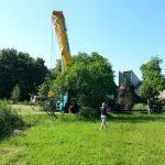 Baum Queerlage Transport nach Wandlitz